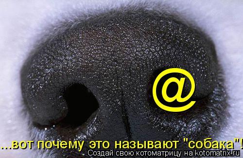 """Котоматрица: @ ...вот почему это называют """"собака""""!"""