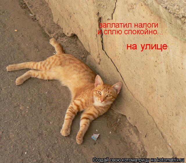Котоматрица: заплатил налоги и сплю спокойно... на улице