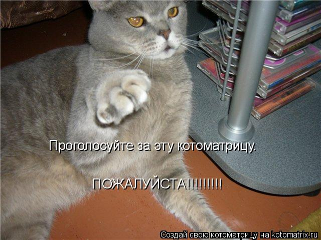 Котоматрица: Проголосуйте за эту котоматрицу. ПОЖАЛУЙСТА!!!!!!!!!