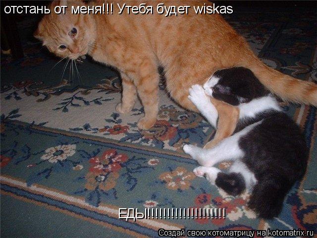 Котоматрица: отстань от меня!!! Утебя будет wiskas ЕДЫ!!!!!!!!!!!!!!!!!!!!
