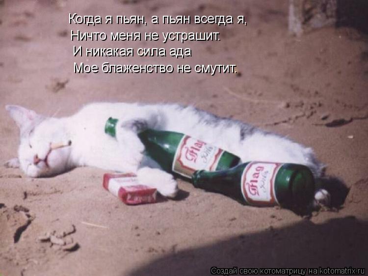 Котоматрица: Когда я пьян, а пьян всегда я, Ничто меня не устрашит. И никакая сила ада Мое блаженство не смутит.