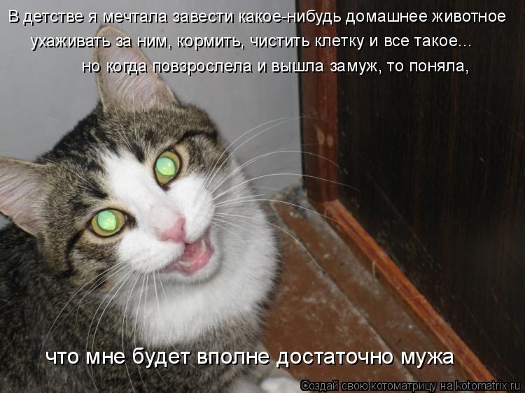Котоматрица: В детстве я мечтала завести какое-нибудь домашнее животное  ухаживать за ним, кормить, чистить клетку и все такое...  но когда повзрослела и в