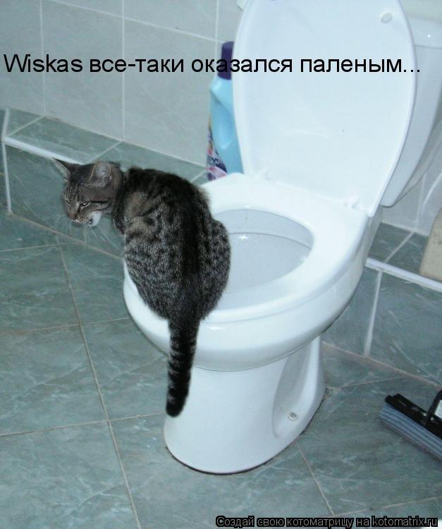 Котоматрица: Wiskas все-таки оказался паленым...
