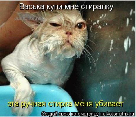 Котоматрица: Васька купи мне стиралку эта ручная стирка меня убивает