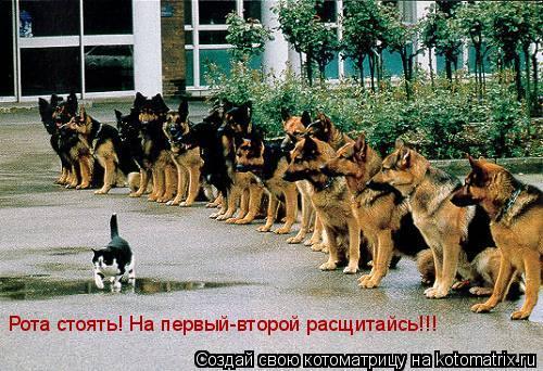 Котоматрица: Рота стоять! На первый-второй расщитайсь!!!