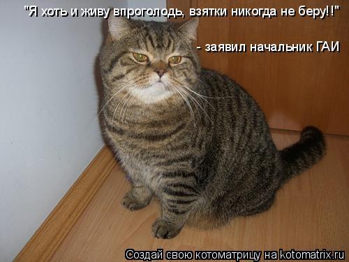 """Котоматрица: - заявил начальник ГАИ """"Я хоть и живу впроголодь, взятки никогда не беру!!"""""""