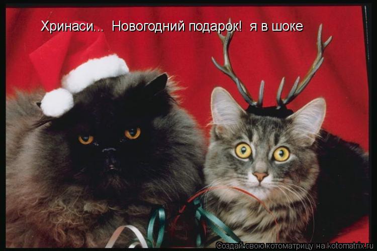Котоматрица: Хринаси...  Новогодний подарок!  я в шоке