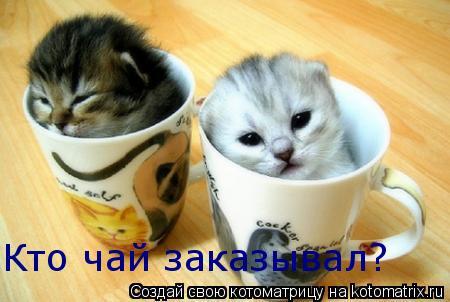 Котоматрица: Кто чай заказывал?