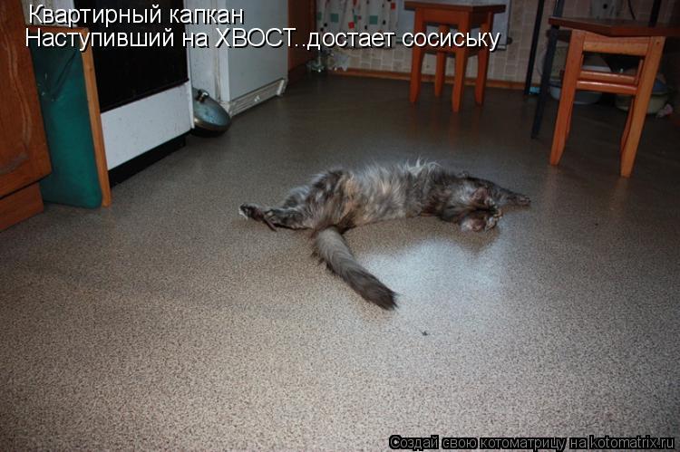 Котоматрица: Квартирный капкан Наступивший на ХВОСТ..достает сосиську
