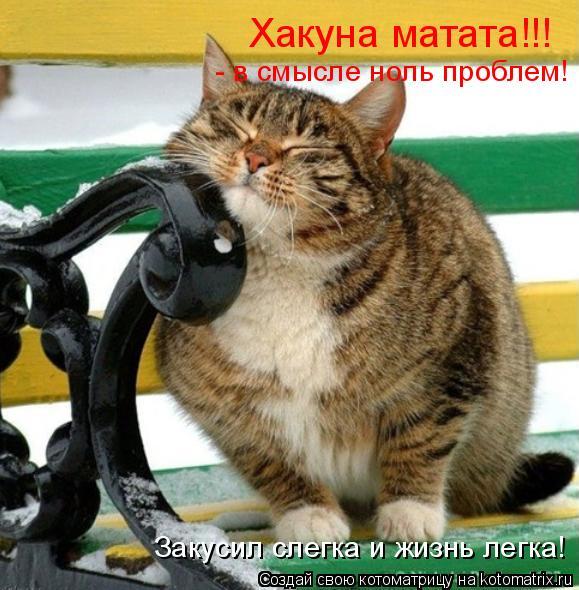 Котоматрица: Хакуна матата!!! - в смысле ноль проблем! Закусил слегка и жизнь легка!
