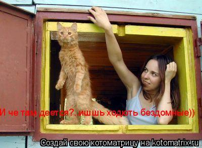 Котоматрица: И че там деется?..ишшь ходють бездомные))