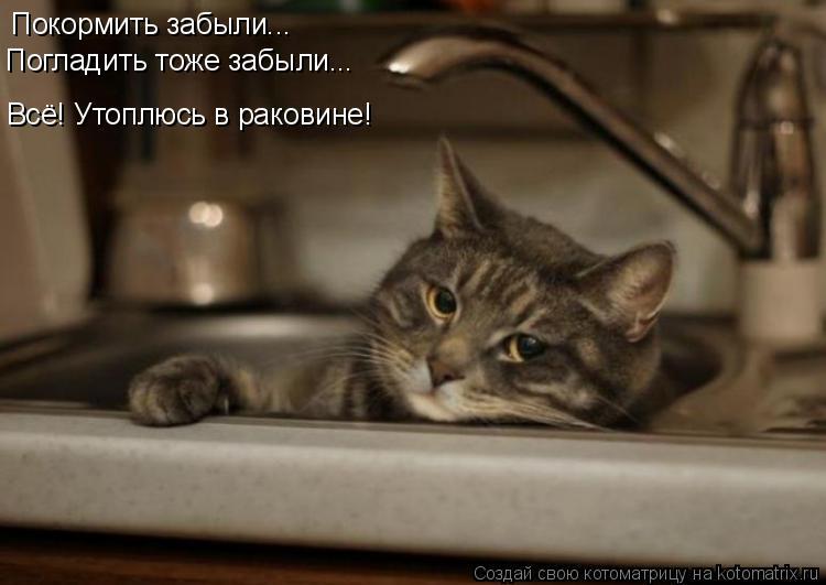 очень смешная фотка с котом