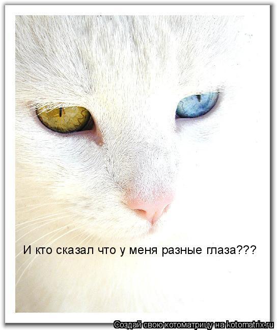 Котоматрица: И кто сказал что у меня разные глаза???