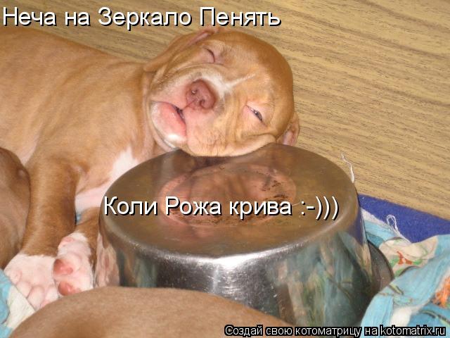 Котоматрица: Неча на Зеркало Пенять  Коли Рожа крива :-)))