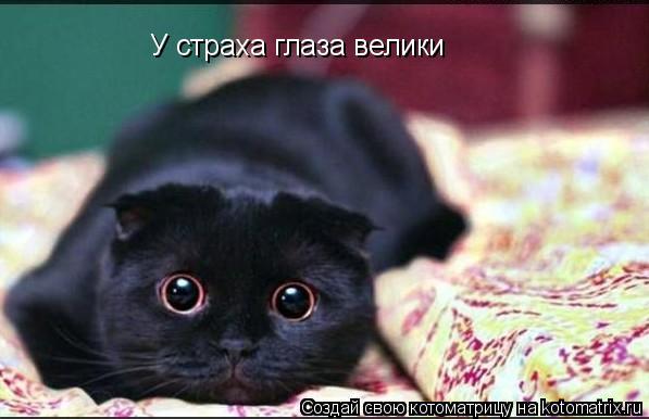 Котоматрица: У страха глаза велики