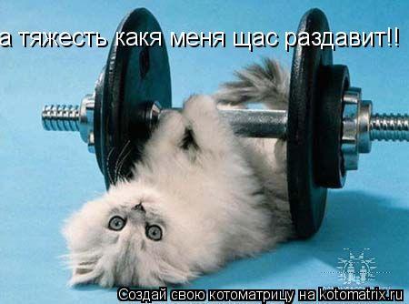 Котоматрица: а тяжесть какя меня щас раздавит!!