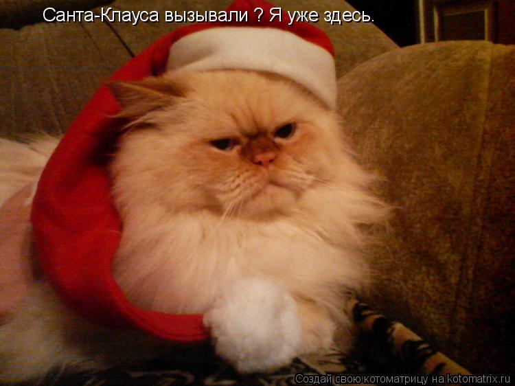 Котоматрица: Санта-Клауса вызывали ? Я уже здесь.