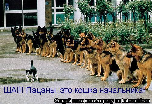 Котоматрица: ША!!! Пацаны, это кошка начальника!