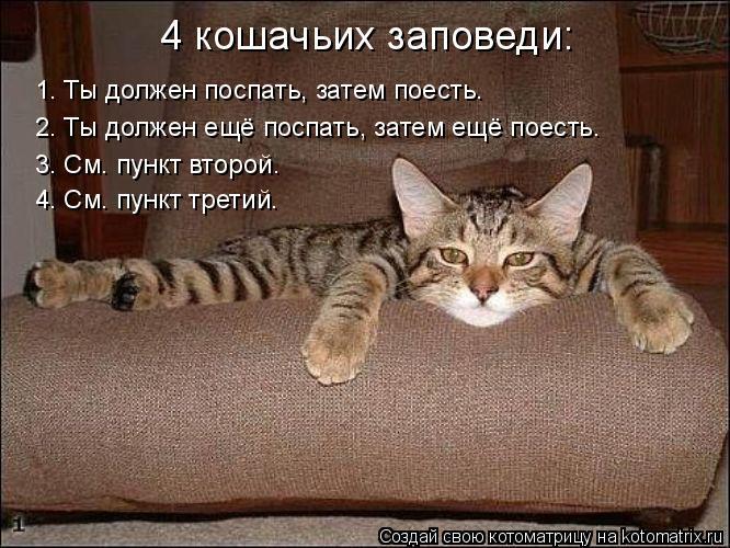 Котоматрица: 1. Ты должен поспать, затем поесть.  2. Ты должен ещё поспать, затем ещё поесть.  3. См. пункт второй.  4. См. пункт третий. 4 кошачьих заповеди: