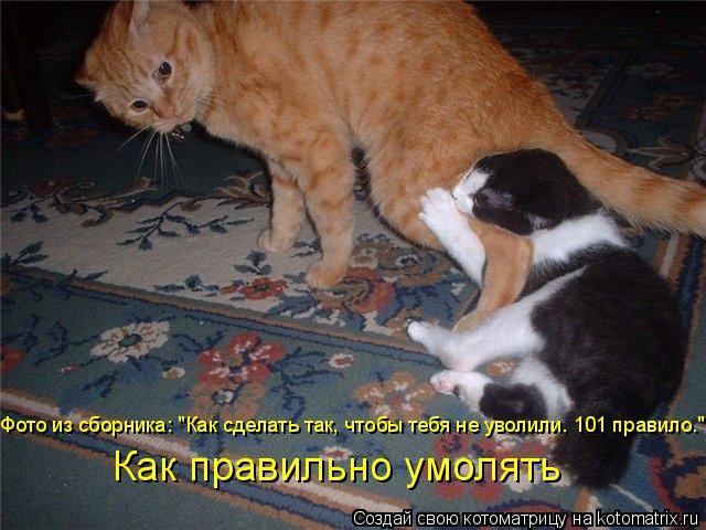 """Котоматрица: Фото из сборника: """"Как сделать так, чтобы тебя не уволили. 101 правило."""" Как правильно умолять"""
