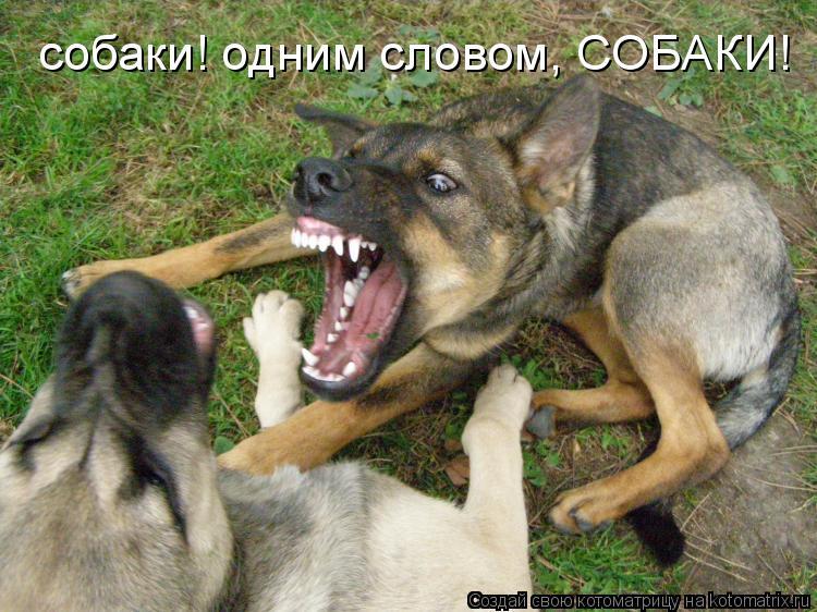 Котоматрица: собаки! одним словом, СОБАКИ!
