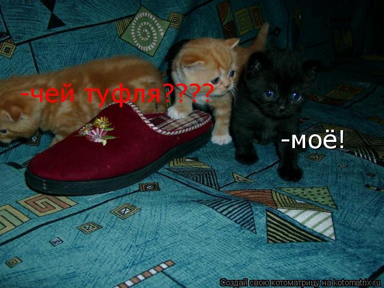 Котоматрица: -чей туфля???? -моё!