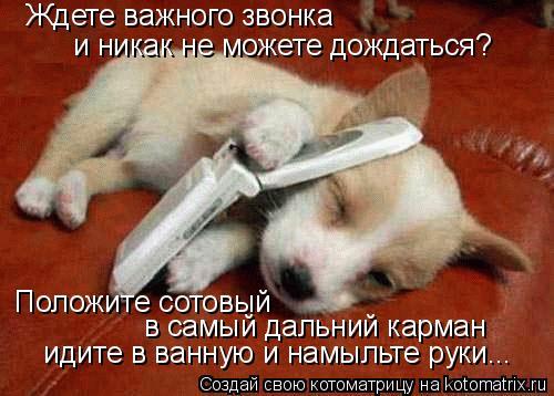Котоматрица: Ждете важного звонка и никак не можете дождаться?  Положите сотовый  в самый дальний карман  идите в ванную и намыльте руки...