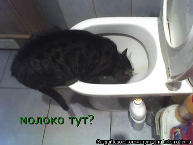 Котоматрица: молоко тут?