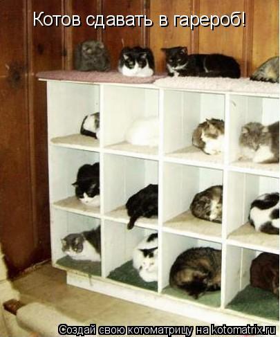 Котоматрица: Котов сдавать в гарероб!