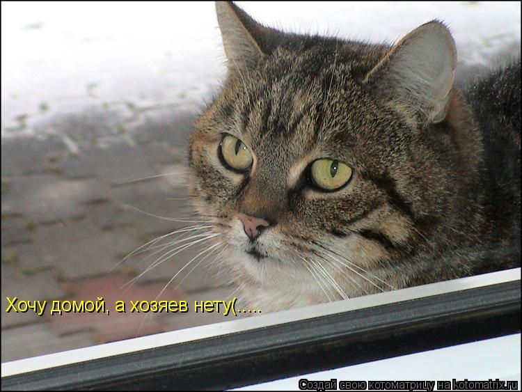 Котоматрица: Хочу домой, а хозяев нету(.....