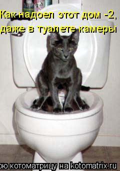 Котоматрица: Как надоел этот дом -2, даже в туалете камеры