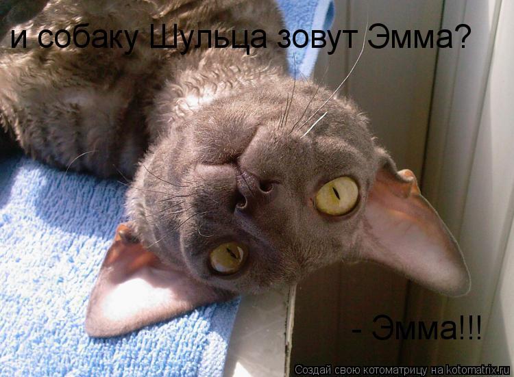 Котоматрица: и собаку Шульца зовут Эмма? - Эмма!!!