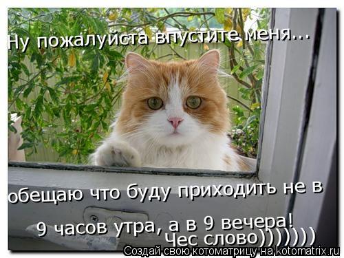 Котоматрица: Ну пожалуйста впустите меня Ну пожалуйста впустите меня... обещаю что буду приходить не в 9 часов утра, а в 9 вечера! Чес слово)))))))