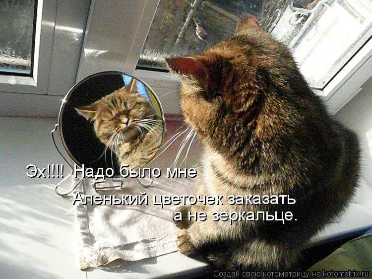 Котоматрица: Эх!!!!  Надо было мне  Аленький цветочек заказать а не зеркальце.