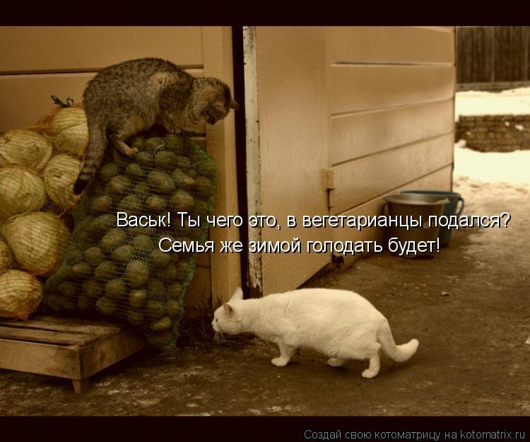 Котоматрица: Васьк! Ты чего это, в вегетарианцы подался?Семья же зимой голодать будет! Васьк! Ты чего это, в вегетарианцы подался? Семья же зимой голодать