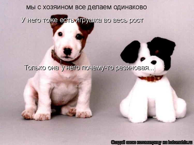 Котоматрица: мы с хозяином все делаем одинаково У него тоже есть игрушка во весь рост Только она у него почему-то резиновая...