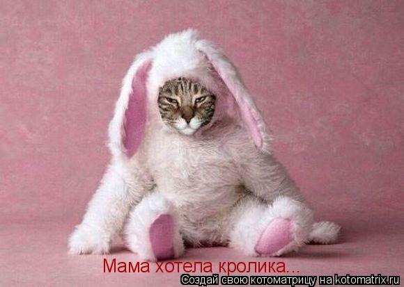 Котоматрица: Мама хотела кролика...