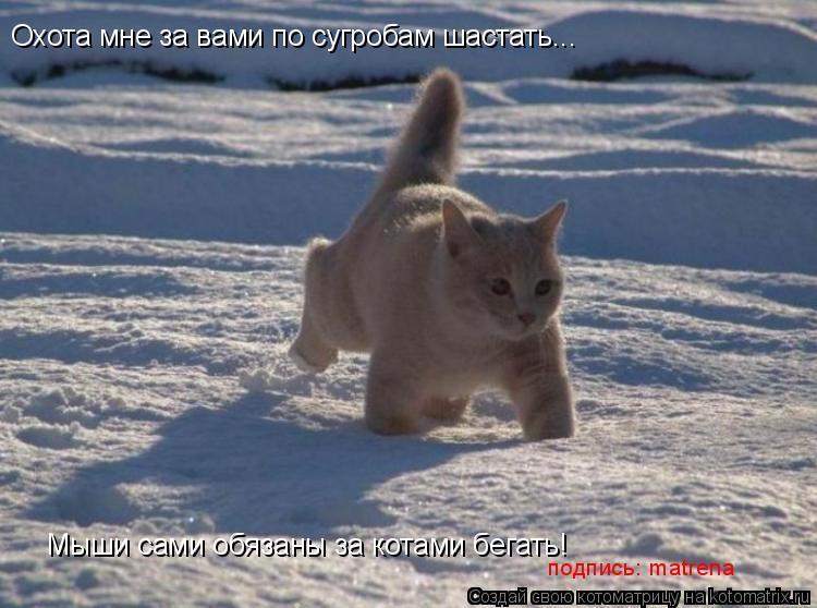Котоматрица: Охота мне за вами по сугробам шастать... Мыши сами обязаны за котами бегать! подпись: matrena