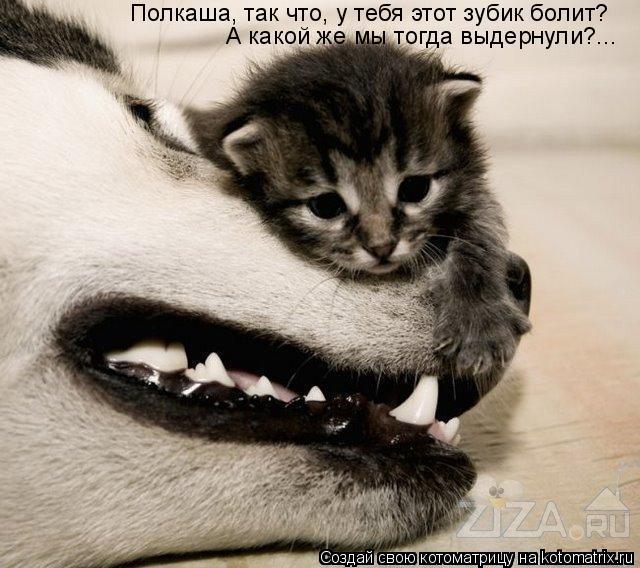 Котоматрица: Полкаша, так что, у тебя этот зубик болит? А какой же мы тогда выдернули?...