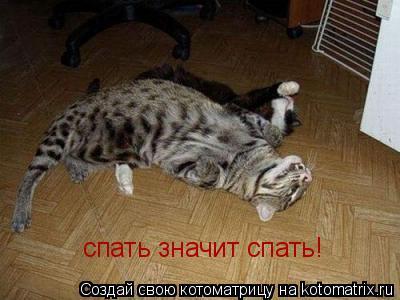 Котоматрица: спать значит спать!