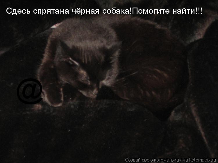 Котоматрица: @ Сдесь спрятана чёрная собака!Помогите найти!!!