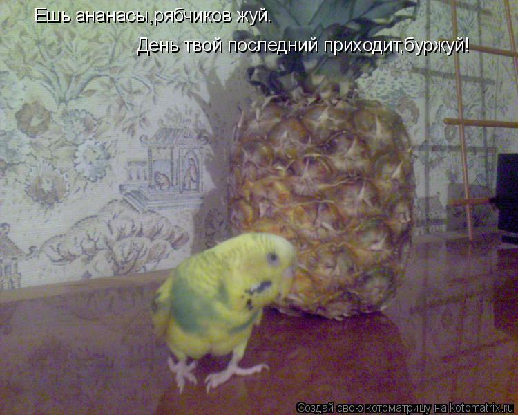 Котоматрица: Ешь ананасы,рябчиков жуй.  День твой последний приходит,буржуй!