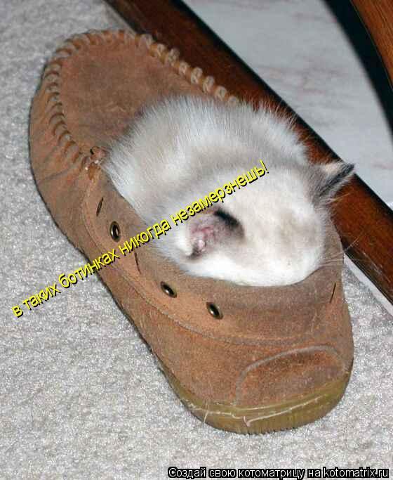 Котоматрица: в таких ботинках никогда незамерзнешь!