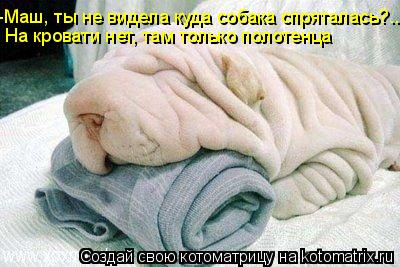 Котоматрица: -Маш, ты не видела куда собака спряталась?..  На кровати нет, там только полотенца