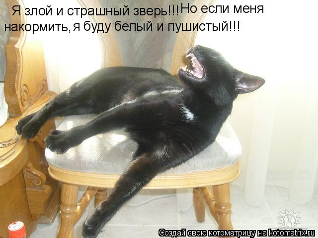 Котоматрица: Я злой и страшный зверь!!! Но если меня накормить, я буду белый и пушистый!!!
