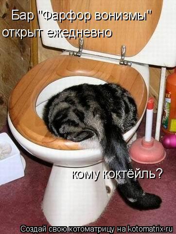 "Котоматрица: Бар ""Фарфор вонизмы""  открыт ежедневно  кому коктёйль?"