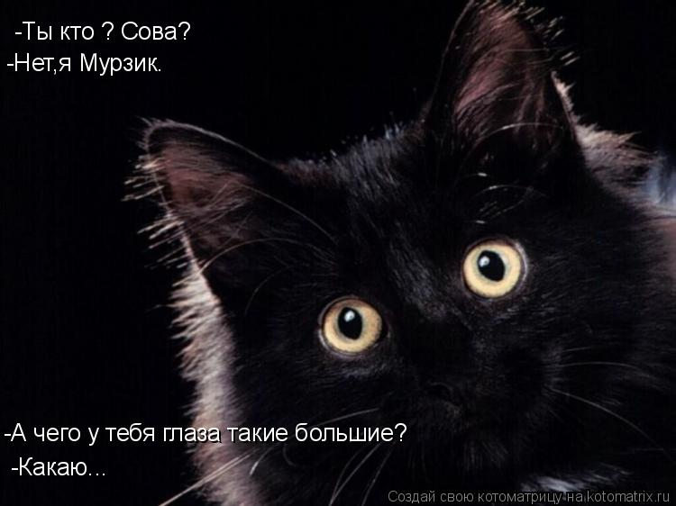Котоматрица: -Ты кто ? Сова? -Нет,я Мурзик. -А чего у тебя глаза такие большие? -Какаю...