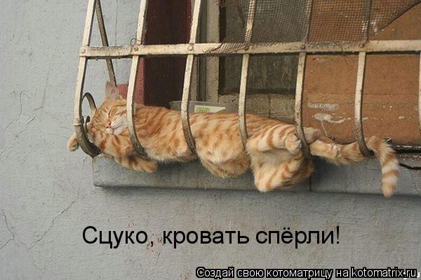 Котоматрица: Сцуко, кровать спёрли!