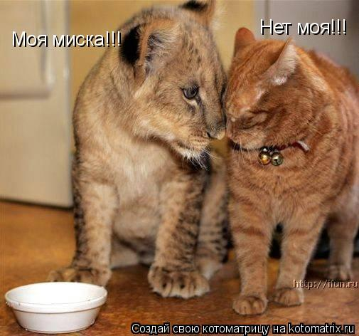 Котоматрица: Моя миска!!! Нет моя!!!
