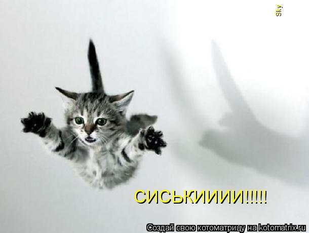 Котоматрица: СИСЬКИИИИ!!!!! Sky